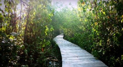 Wisata Hutan Mangrove Wonorejo
