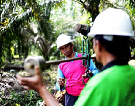Dukungan dari Asian Agri untuk Petani Swadaya