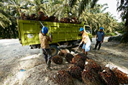 Royal Golden Eagle (RGE)  Bantu Petani Kelapa Sawit